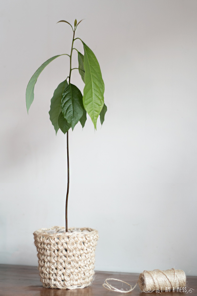 Sisal-crochet-planter